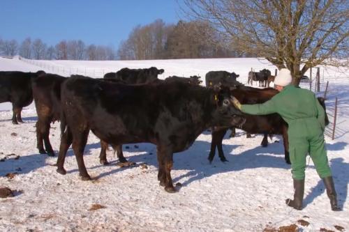 Lucki Maurer, 60 Wagyu Rinder und 800 Grad Oberhitze für das perfekte Steak